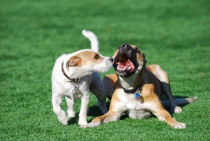 Artificial Turf For Dogs: What Are The Benefits? 1