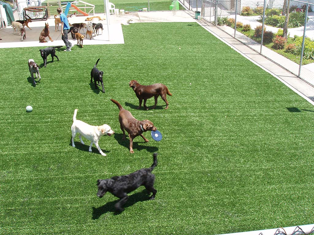 Artificial Pet Turf installation at a dog park in texas
