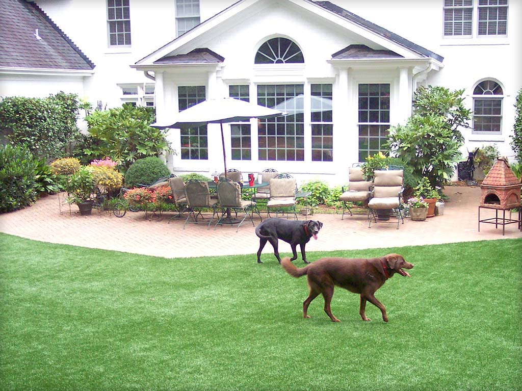 Black & Tan dog walking on recent install of pet turf in Fort Worth, Texas Backyard