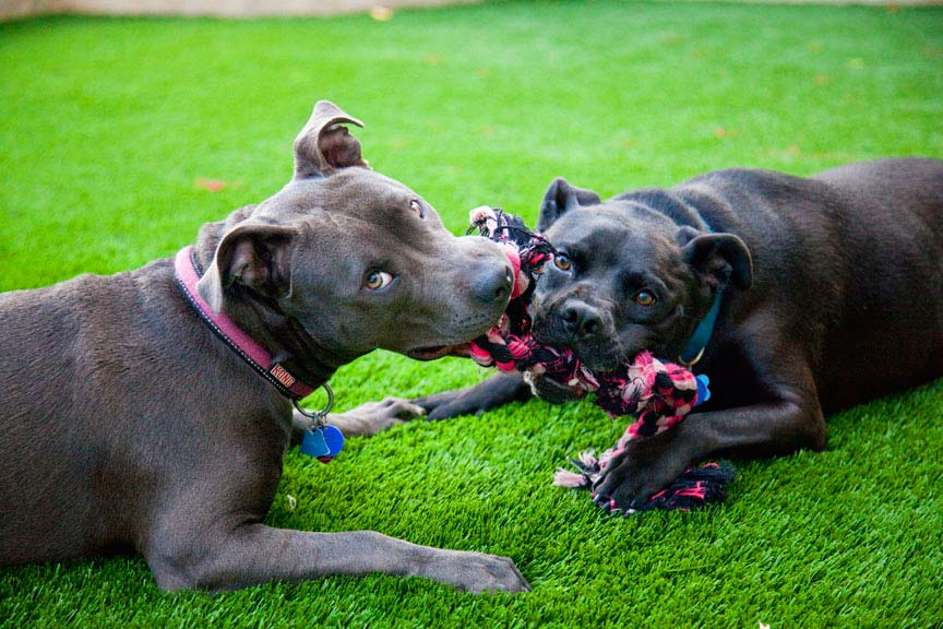 Keep Your Dog Clean with Artificial Turf 1