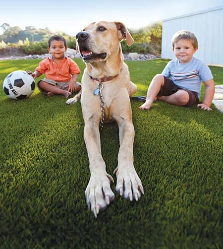 5 Reasons Your Dog Will Enjoy Artificial Turf 1