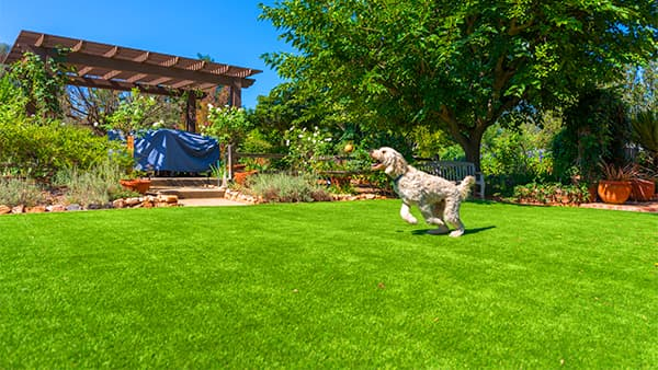 artificial grass for pets, ideal-turf, dallas