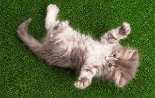 best artificial grass for cats
