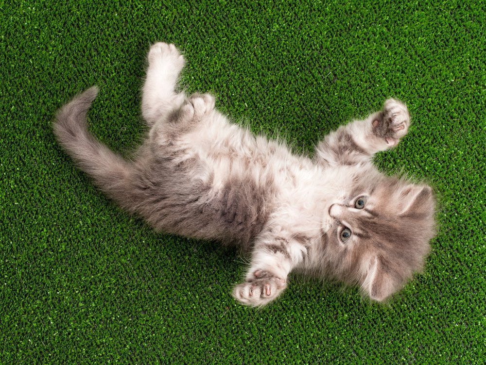 best artificial grass for cats