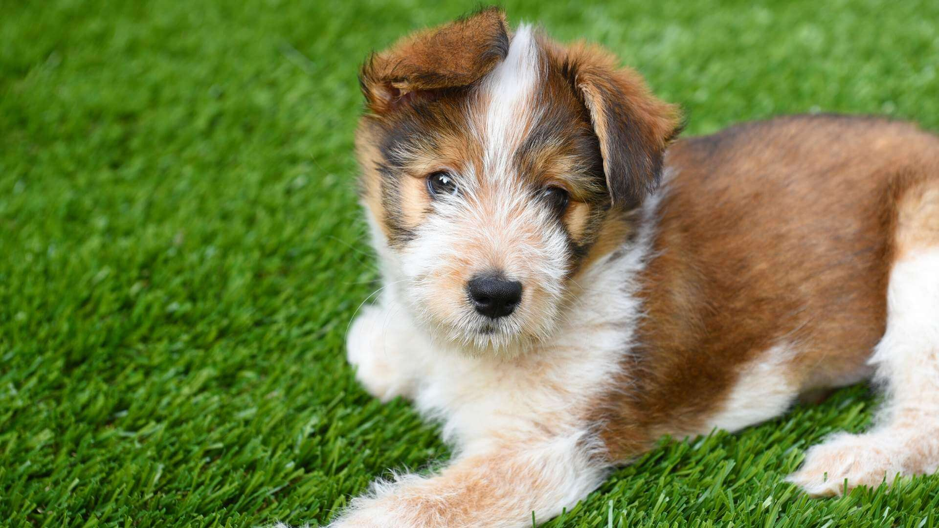 100% Pet-Friendly Artificial Grass for Dogs