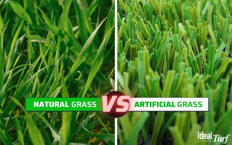 How to prevent brown patches in grass