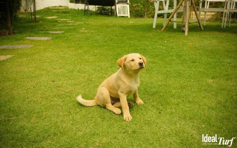 What Causes Dog Urine Spots in Grass