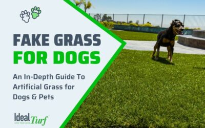 Fake Grass for Dogs-Ultimate Pet Turf Buyers Guide