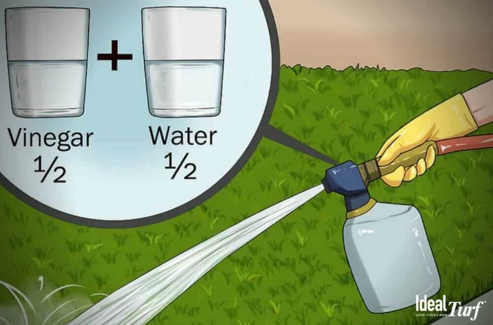 How to remove bacteria from artificial grass - Hose spraying equal parts vinegar & water on synthetic grass lawn.