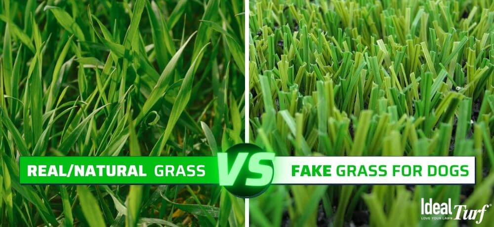 Real Grass VS. Fake Grass for Dogs