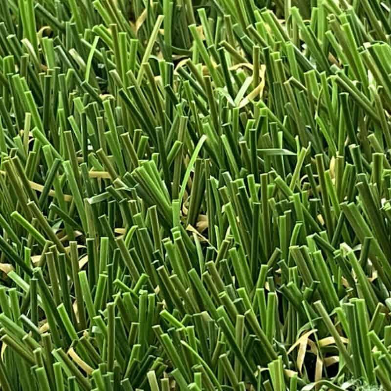 Dunwich 83 Closeup