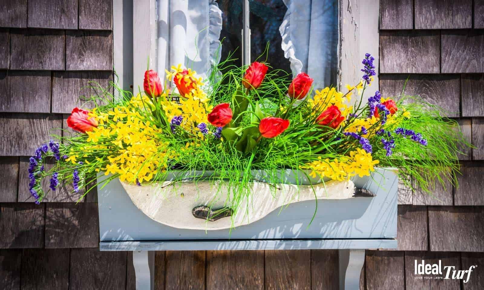 Flower Box on Window