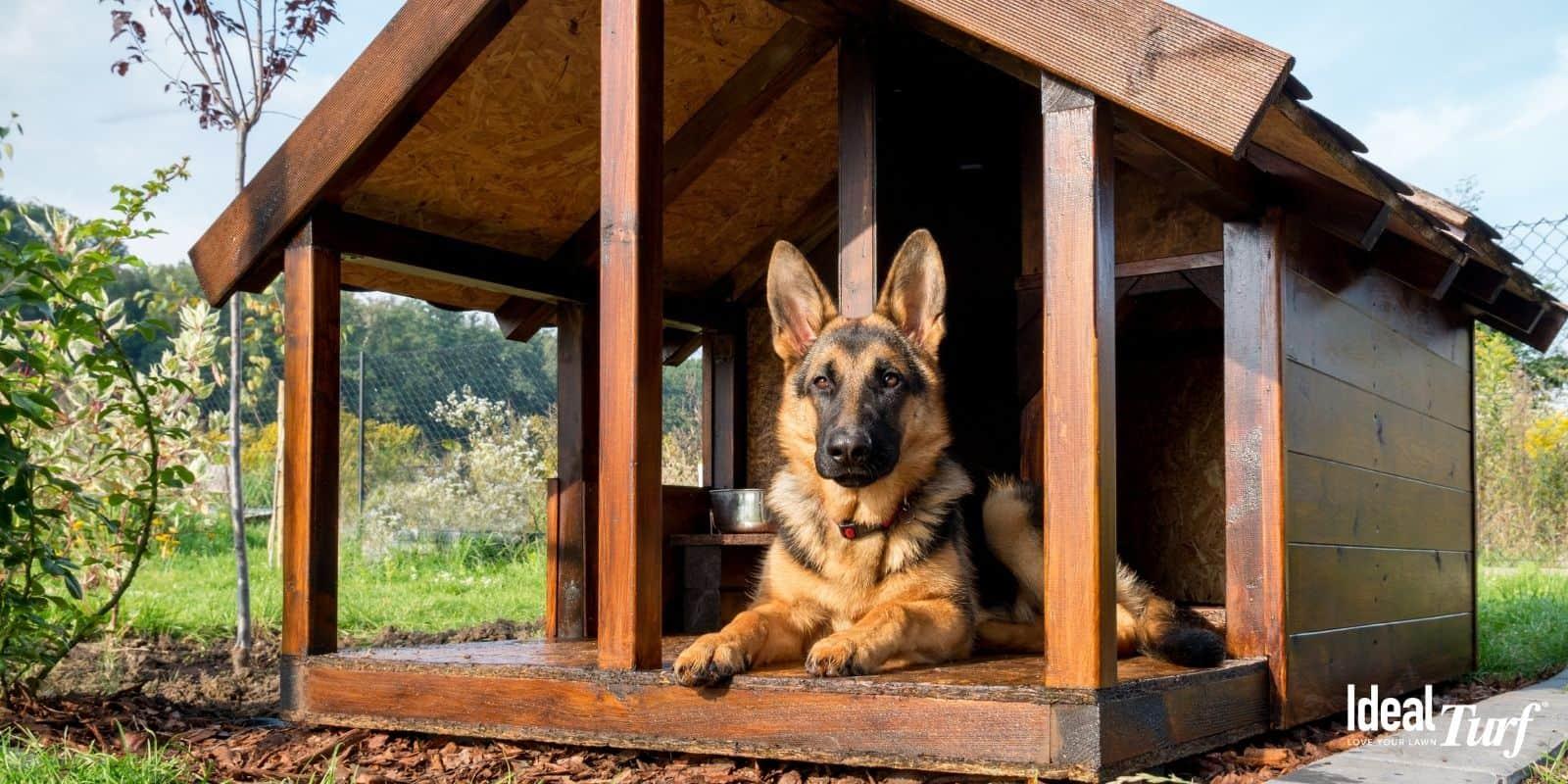 Dog-Safe Landscaping