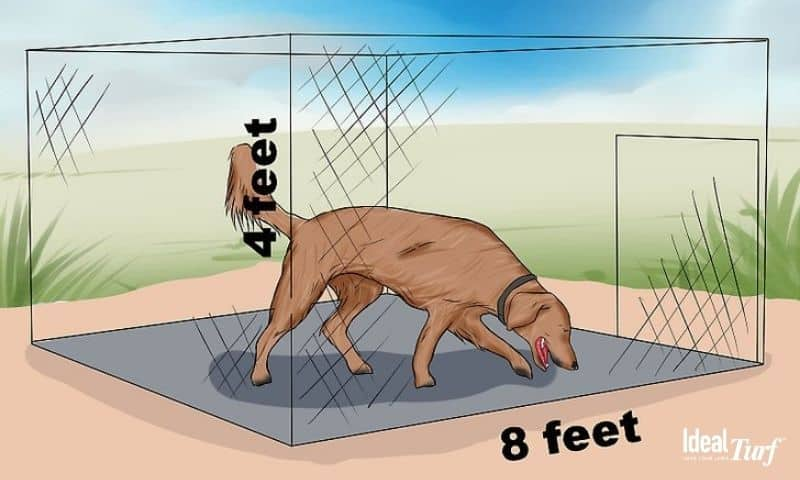 Dog Size & Space Req. for Exercise