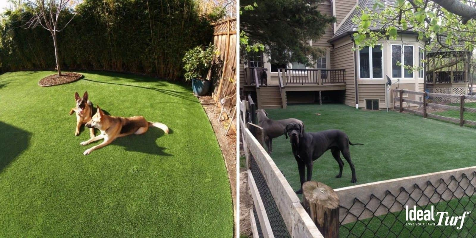 Dogs in two artificial grass dog runs