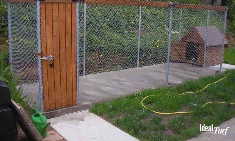 Dog Run w Concrete Ground Cover