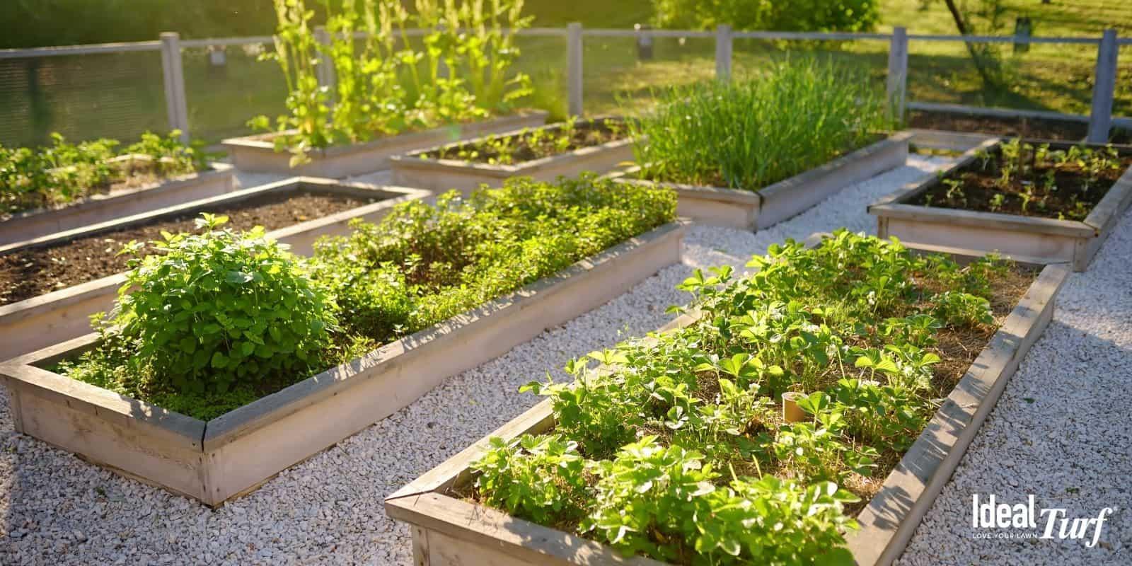Plant a Veggie Garden