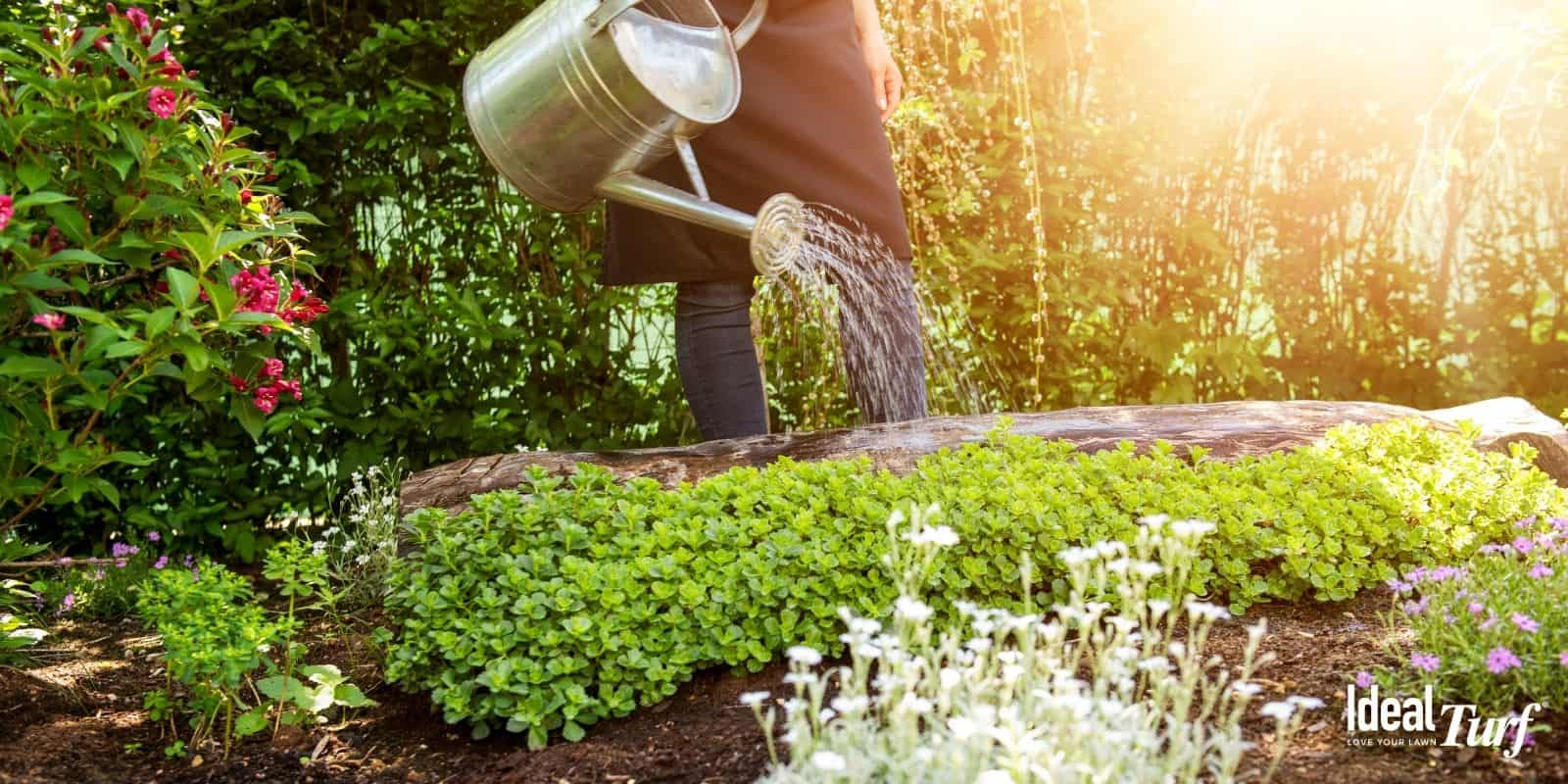 Water Your Garden with Greywater