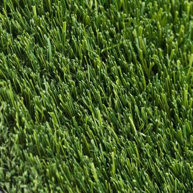 Coventry 94 closeup of turf fibers