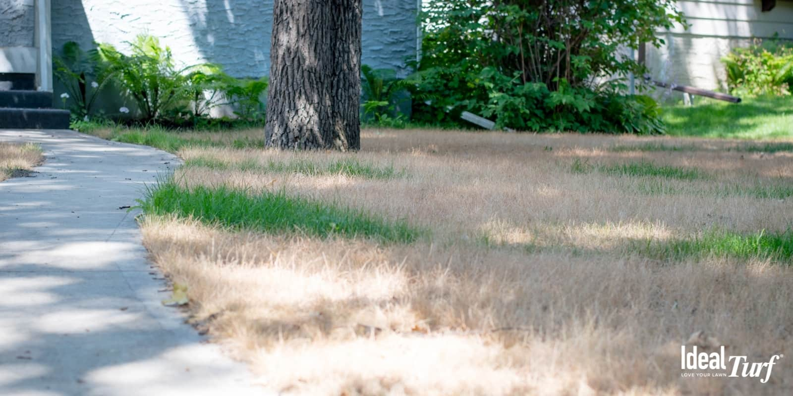 Natural Grass Aesthetics