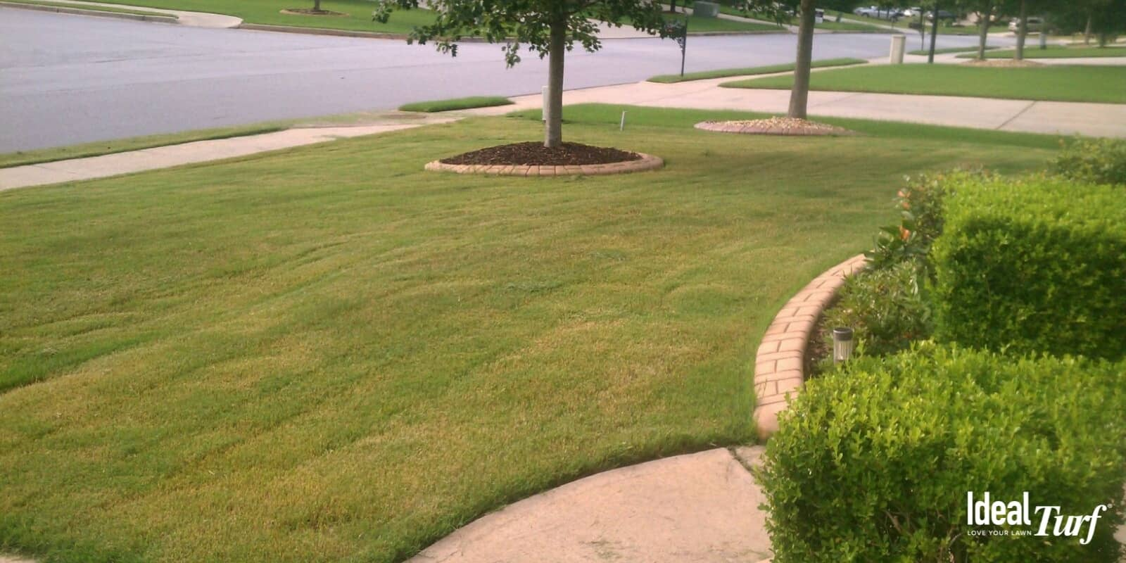 Natural Grass Lawn With Brown Spots