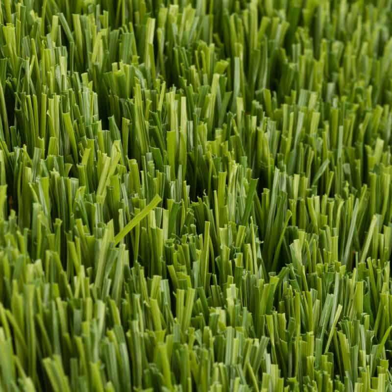 Preston 93 closeup of turf fibers