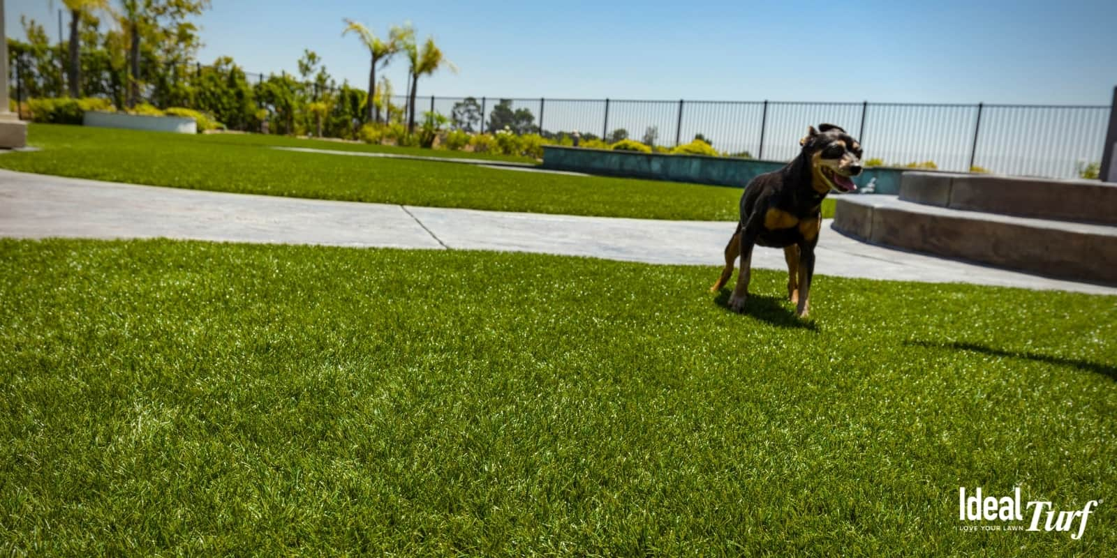 Dog standing on artificial grass in a dog-friendly backyard