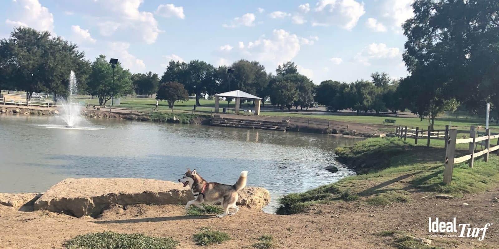 Z-Bonz Dog Park