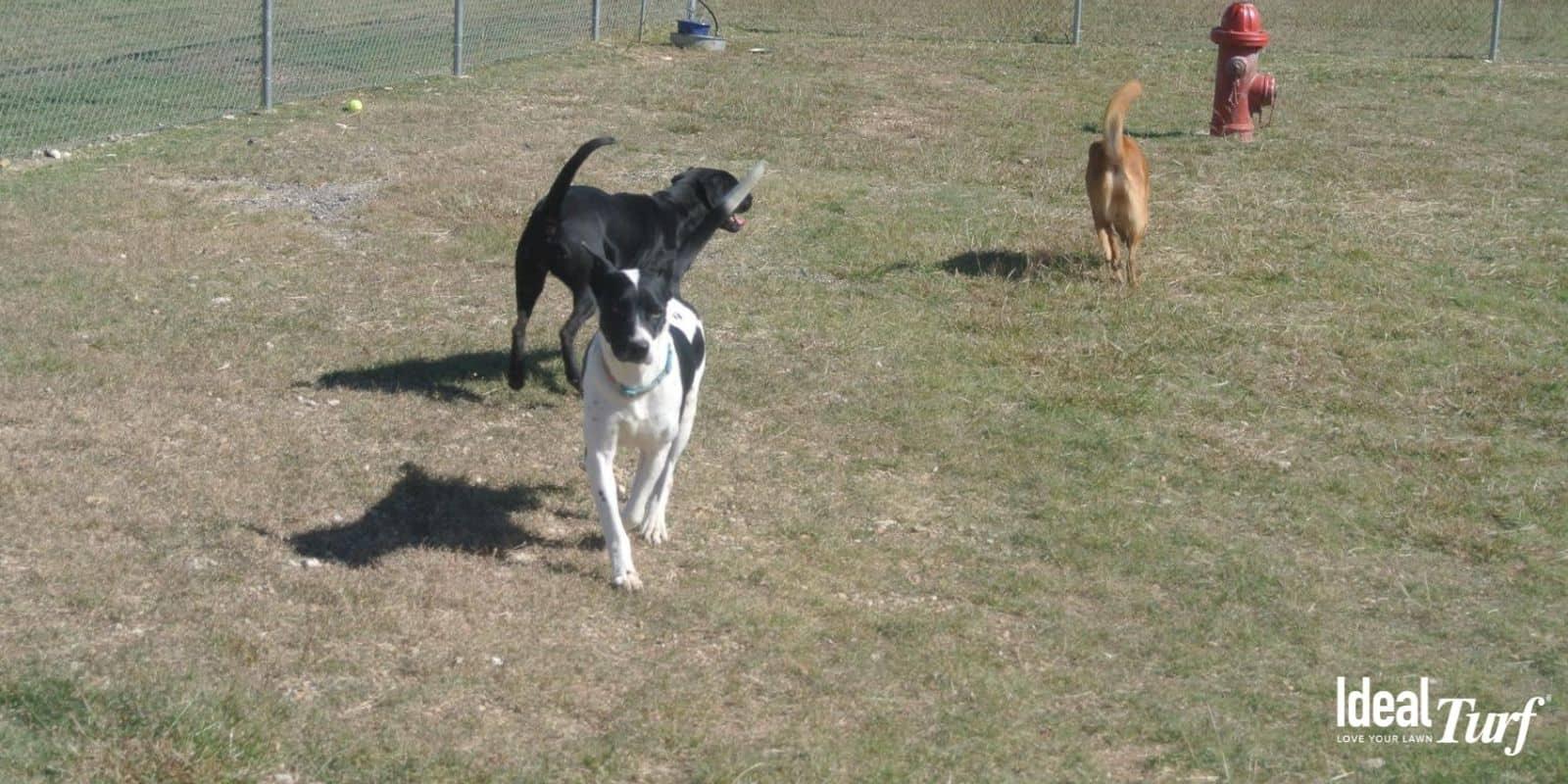 Buzz Fence Dog Park