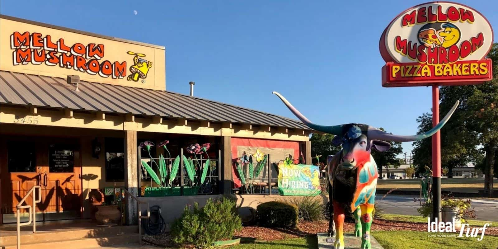Picture of the front entrance with longhorn outside of the Mellow Mushroom Restaurant in Fort Worth