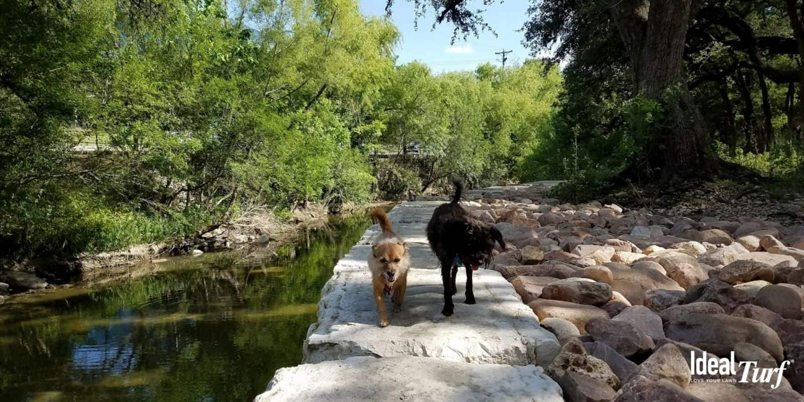 6. Shoal Creek Greenbelt Dog Park Austin TX