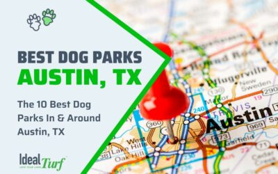 Best Dog Parks Austin